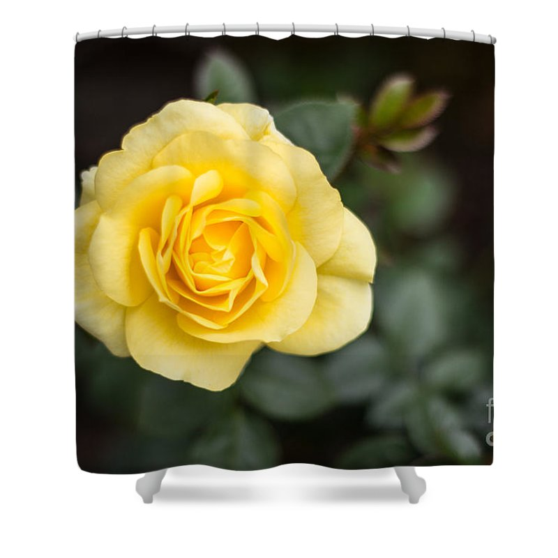 Flowers Shower Curtain featuring the photograph Sunshine by Suzanne Luft