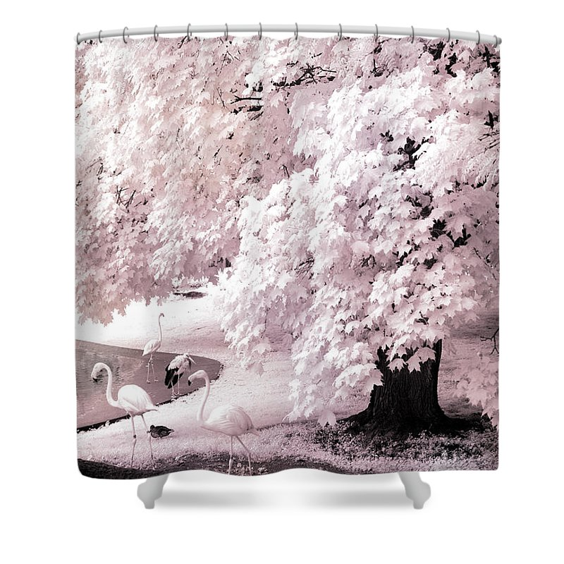 Infrared Shower Curtain featuring the photograph Infrared Pink Flamingo Surreal Nature - Pink Flamingos by Kathy Fornal