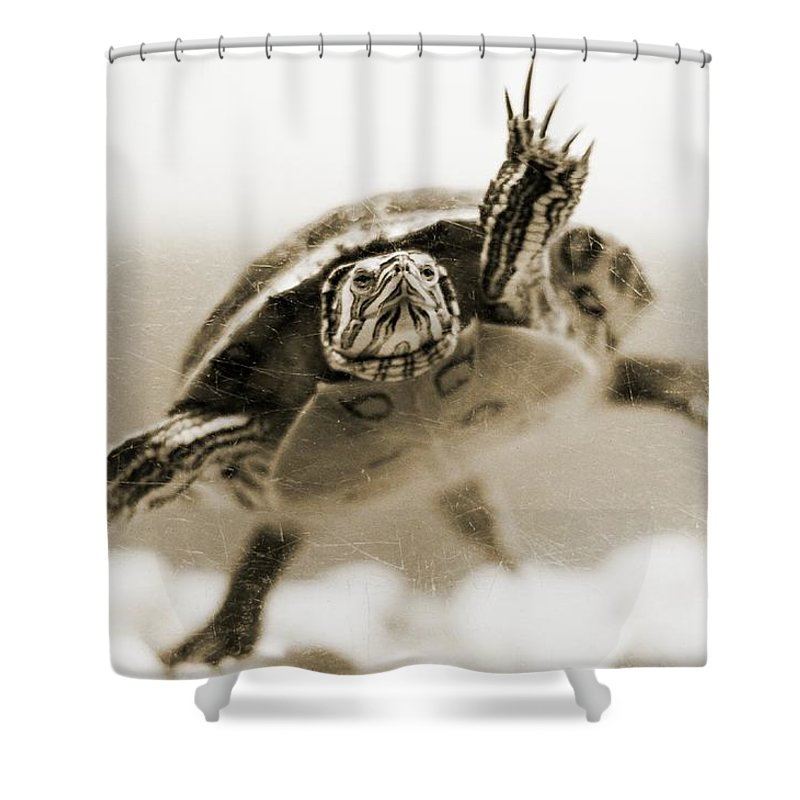 Aquarium Shower Curtain featuring the photograph Swallow Like by Yevgeni Kacnelson