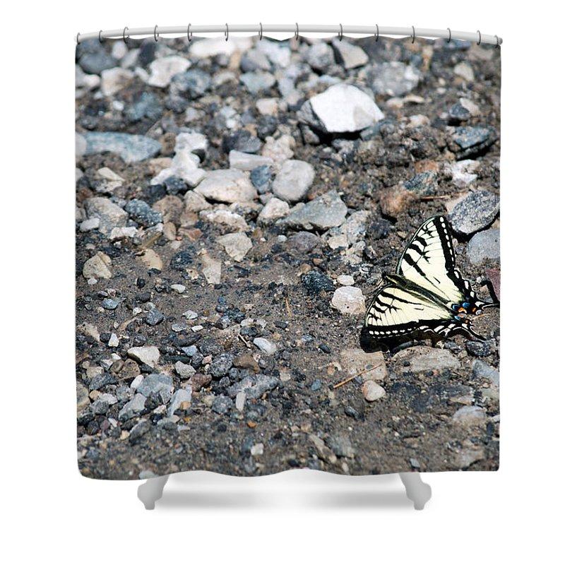 Swallowtail Shower Curtain featuring the photograph Swallowtail by Linda Kerkau