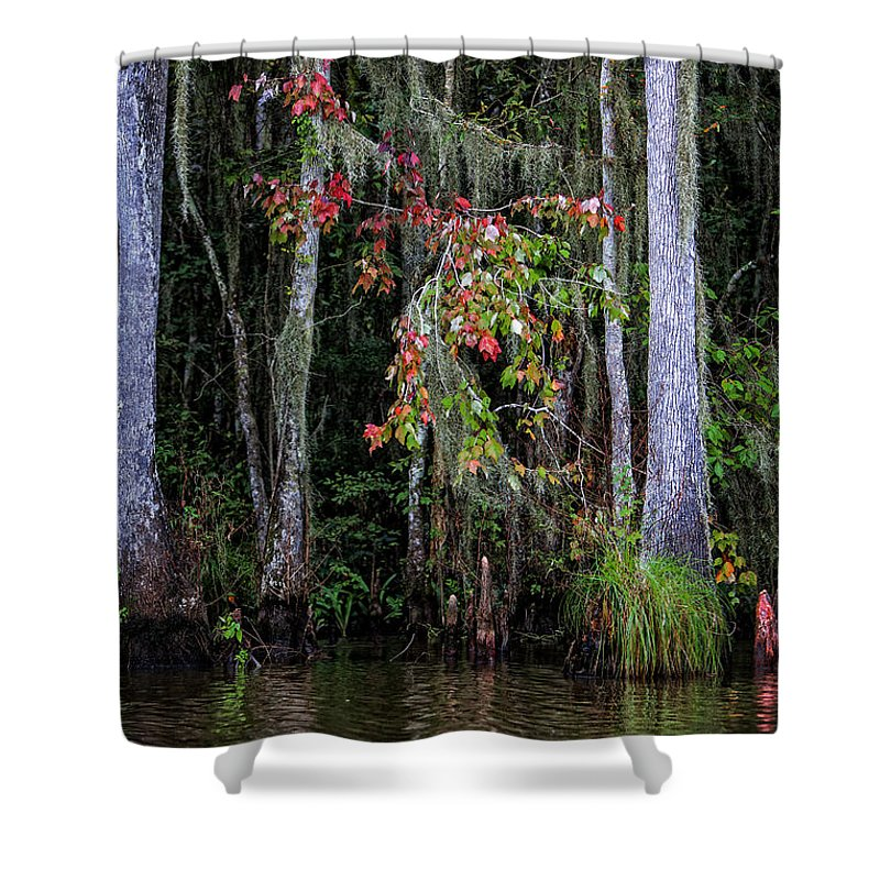 Swamp Shower Curtain featuring the photograph Swamp Beauty by Diana Powell