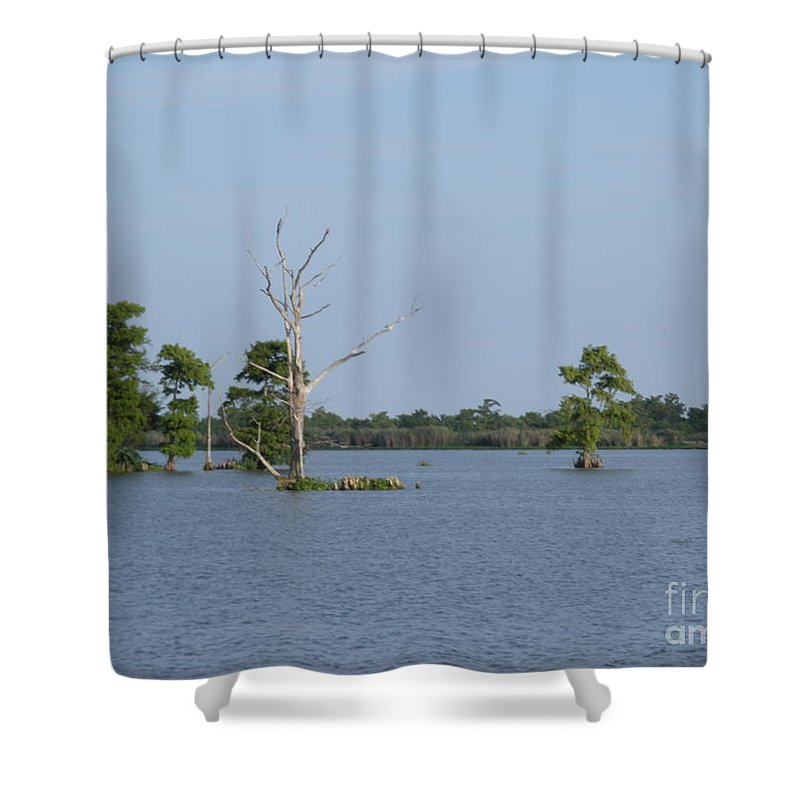 Water Lilly Shower Curtain featuring the photograph Swamp Cypress Trees by Joseph Baril
