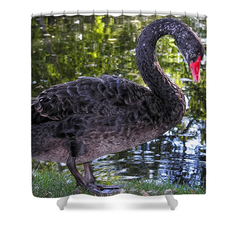 Black Swan Shower Curtain featuring the photograph Swan Song by Kathleen Bishop