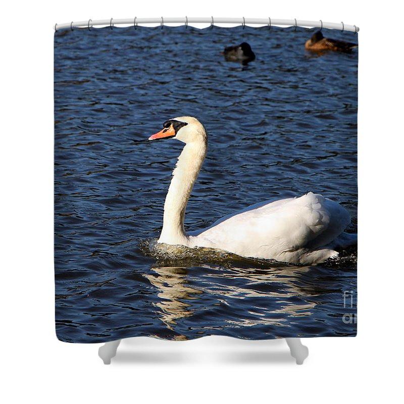 Swan Shower Curtain featuring the photograph Swan Swim by Brigitte Mueller