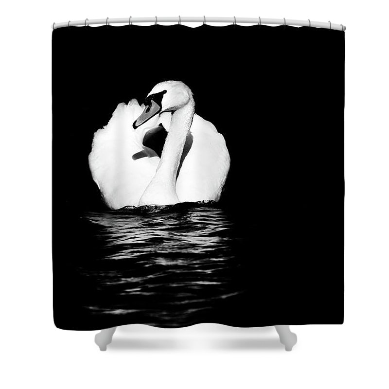 Swan Shower Curtain featuring the photograph Swan White On Black by Karol Livote