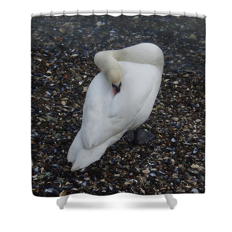 Swan Shower Curtain featuring the photograph Swan1 by Robert Nickologianis