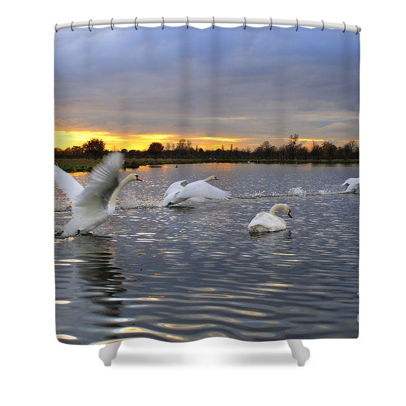 England Shower Curtain featuring the photograph Swans At Sunset by Lana Enderle