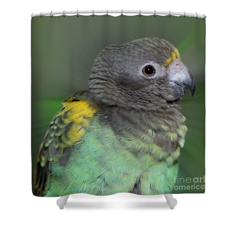Meyers Parrot Shower Curtain featuring the photograph Sweet Baby Meyers Parrot by Smilin Eyes Treasures