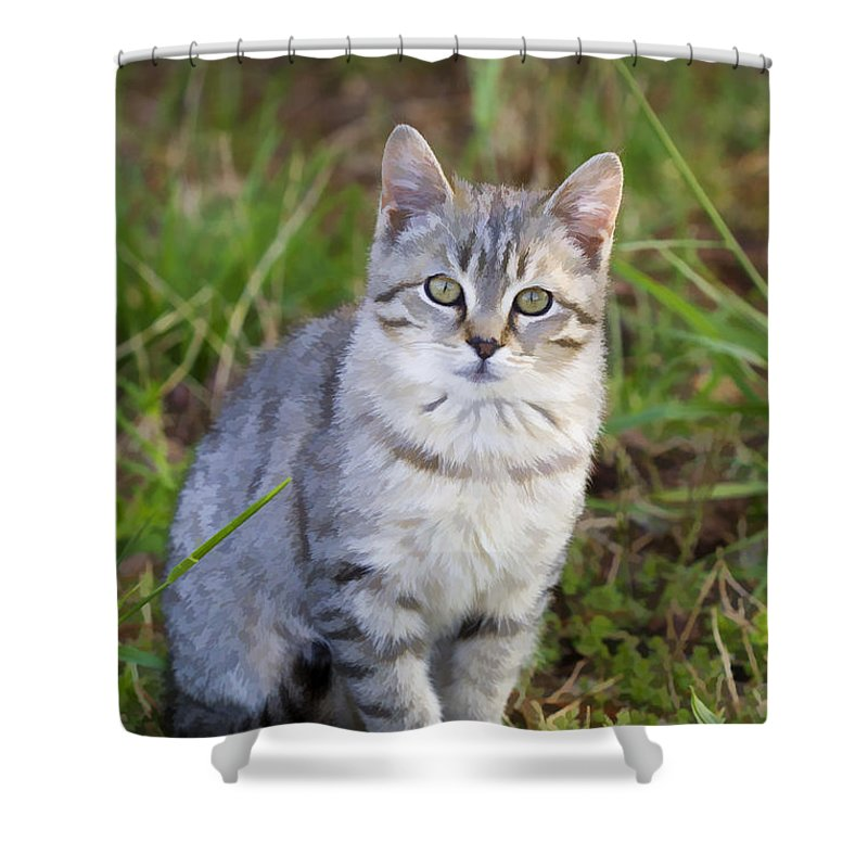 Tabby Shower Curtain featuring the photograph Sweet Little Tabby Kitten by Kathy Clark