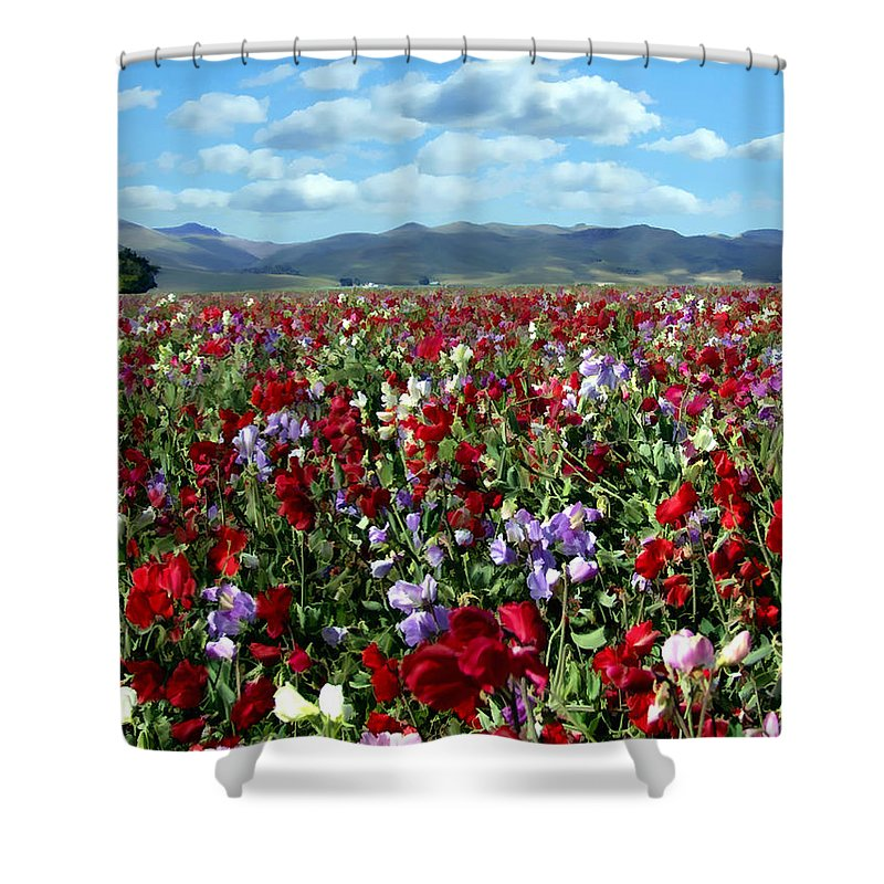 Flowers Shower Curtain featuring the photograph Sweet Peas Forever by Kurt Van Wagner