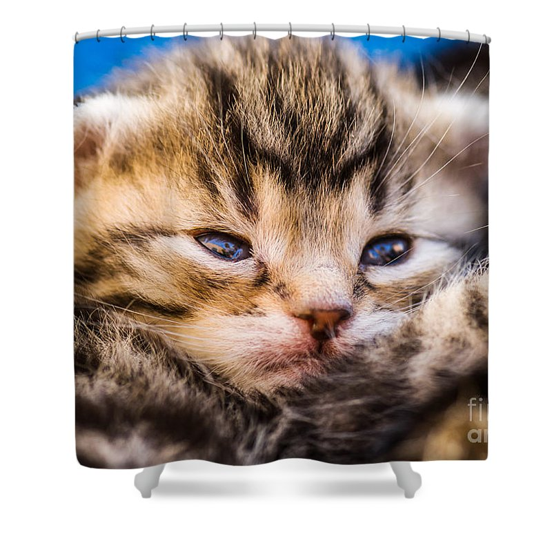 Young Shower Curtain featuring the photograph Sweet Small Kitten by Juergen Ritterbach
