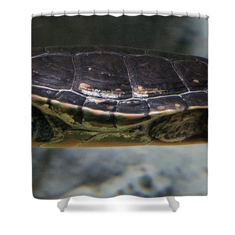 Turtle Shower Curtain featuring the photograph Swim by Suzanne Luft
