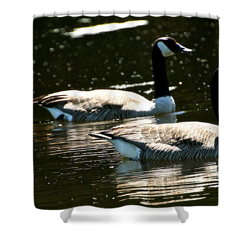 Waterfowl Shower Curtain featuring the photograph Synched by Susan Herber