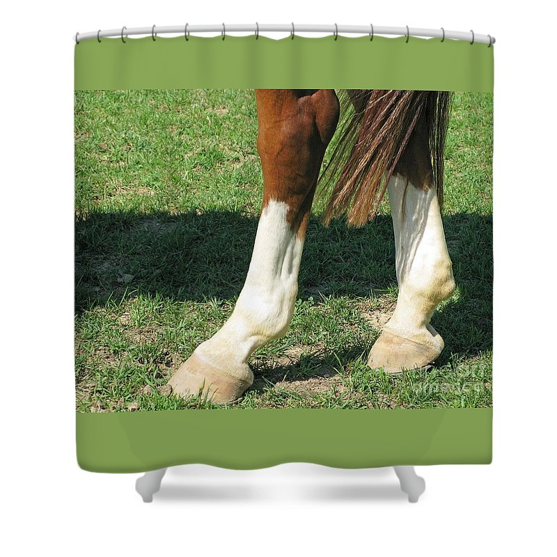 Horse Shower Curtain featuring the photograph Tail End by Ann Horn