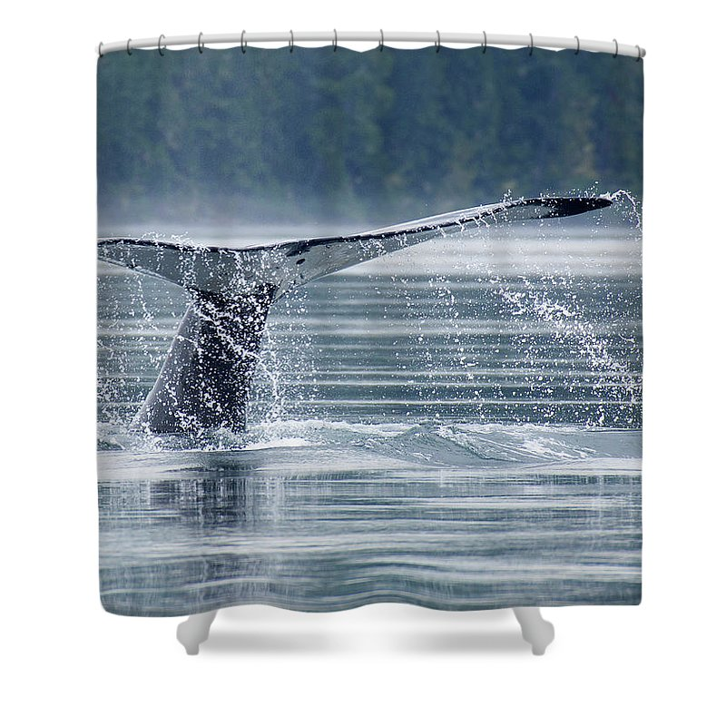 One Animal Shower Curtain featuring the photograph Tail Of Humpback Whale by Grant Faint