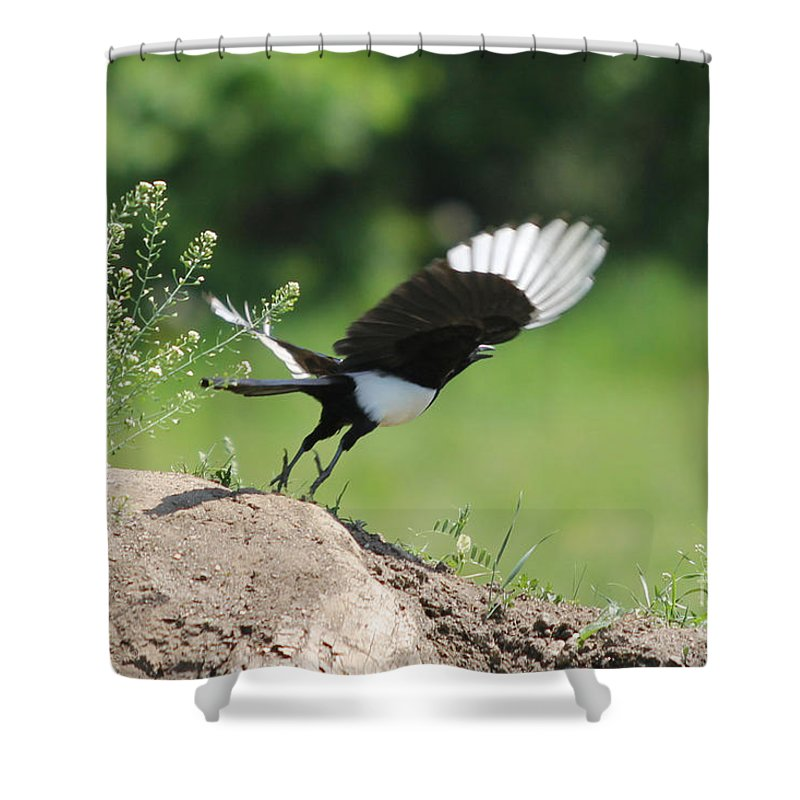 Bird Shower Curtain featuring the photograph Take Off by Jivko Nakev