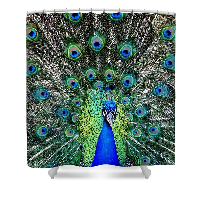 Feathers Shower Curtain featuring the photograph Talk Of The Walk by Karen Wiles