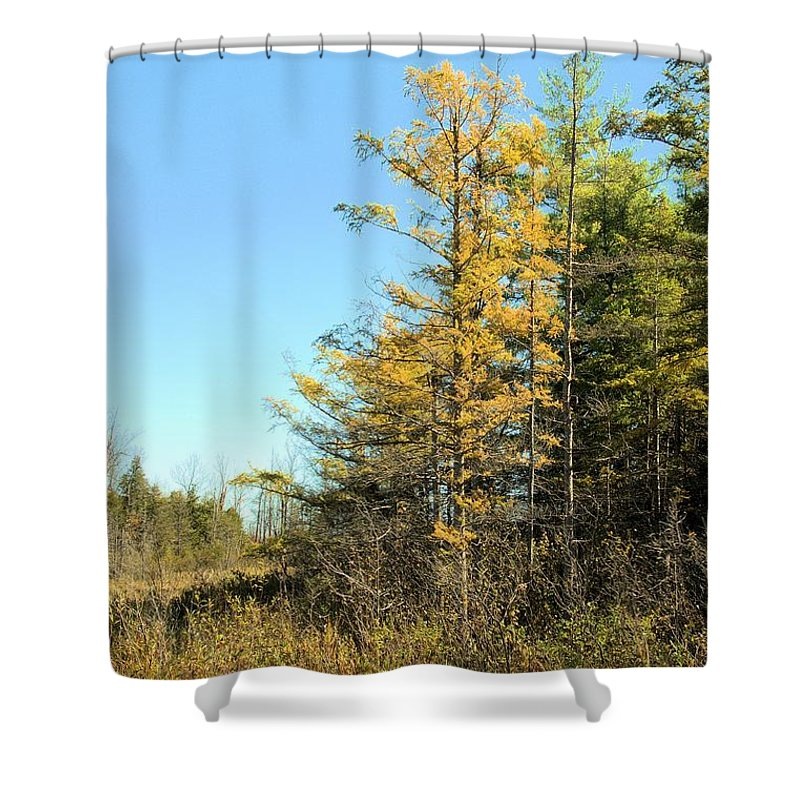 Tamarak Shower Curtain featuring the photograph Tamarak Gold by Valerie Kirkwood