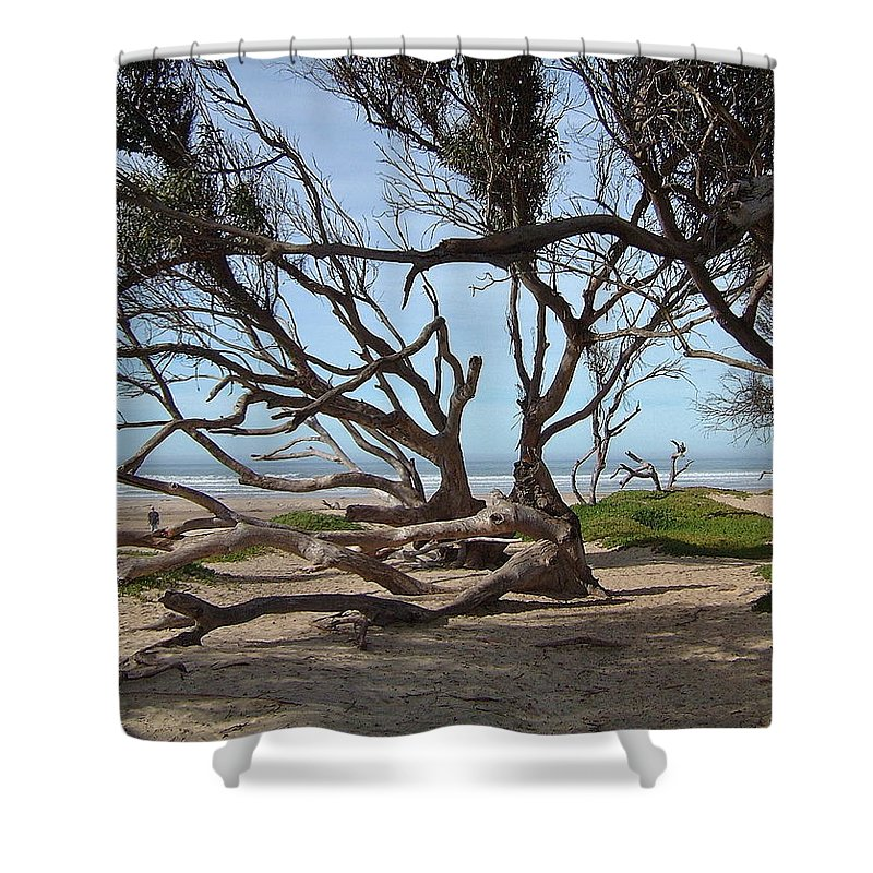 Ocean Shower Curtain featuring the photograph Tangle Of California Trees by Susan Wyman