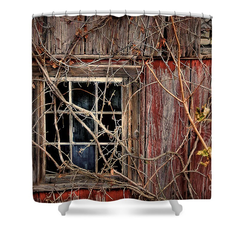 Barn Shower Curtain featuring the photograph Tangled Up In Time by Lois Bryan