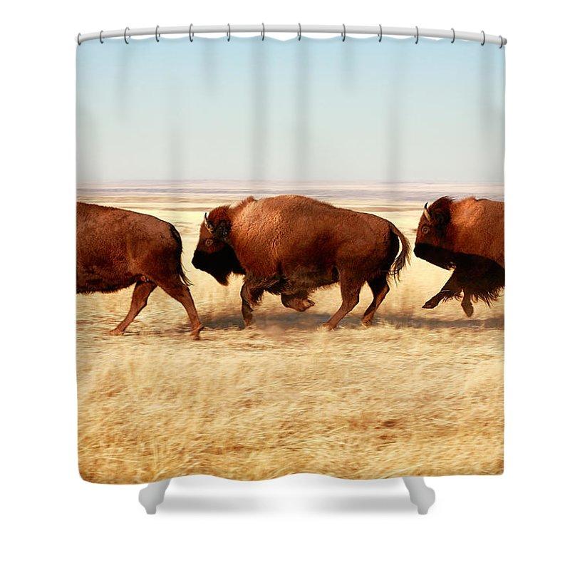 Buffalo Shower Curtain featuring the photograph Tatanka by Todd Klassy