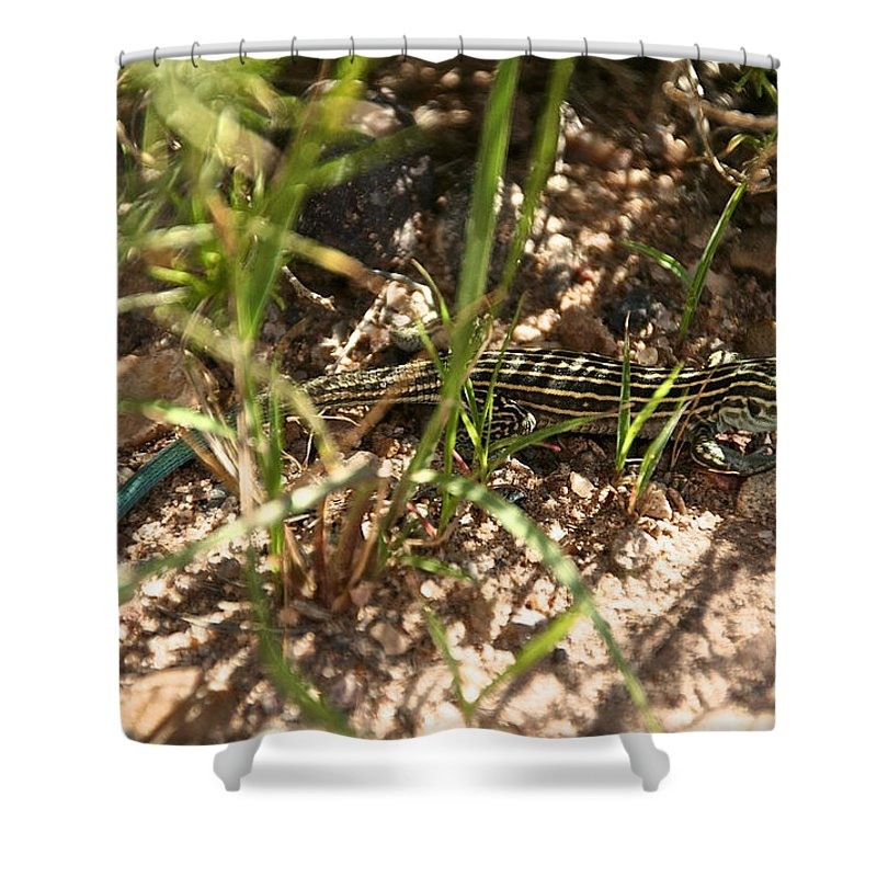 Desert Shower Curtain featuring the photograph Teal Tail by Susan Herber