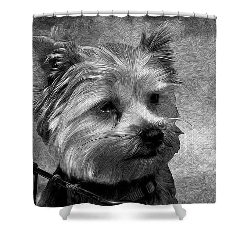 Playing With Light Shower Curtain featuring the photograph Terrier - Dog - Playing With Light by Liane Wright