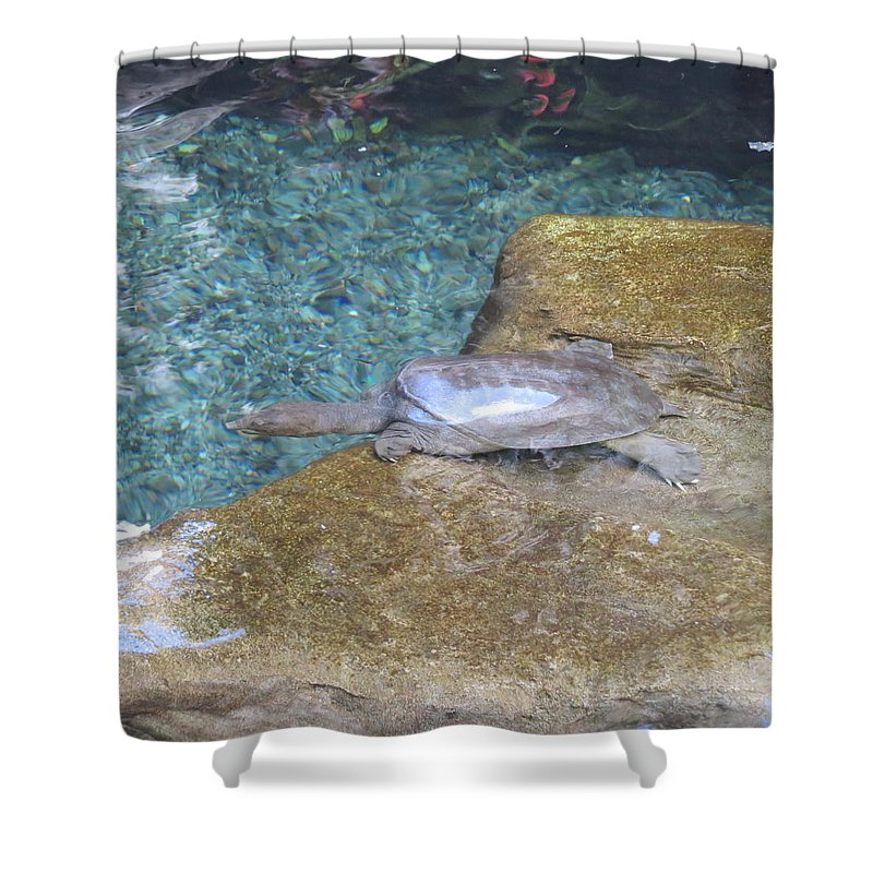 Turtle Shower Curtain featuring the photograph Testing The Waters by Karen Winkfield