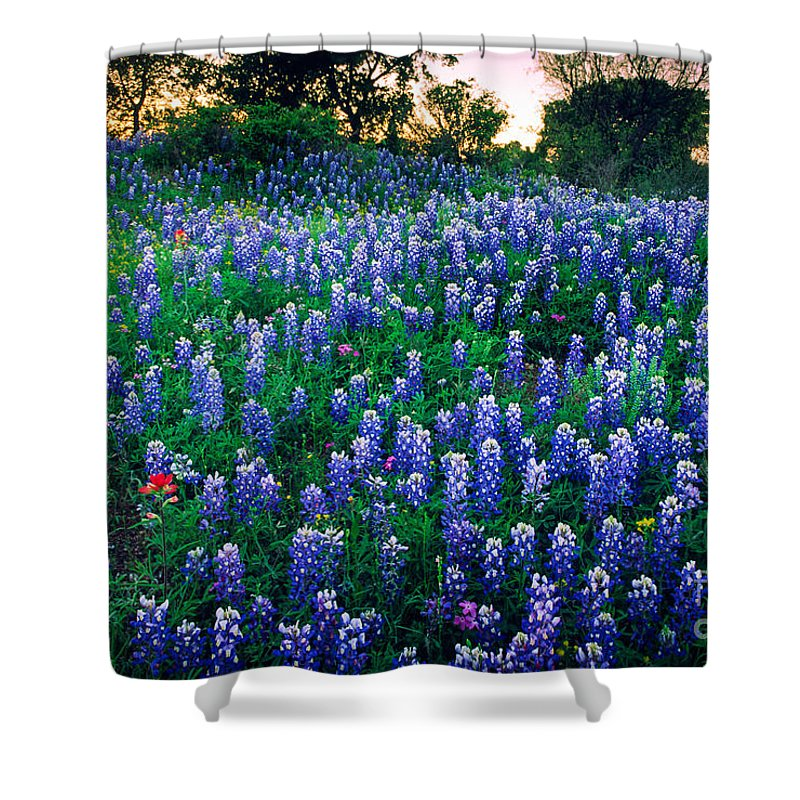 America Shower Curtain featuring the photograph Texas Bluebonnet Field by Inge Johnsson