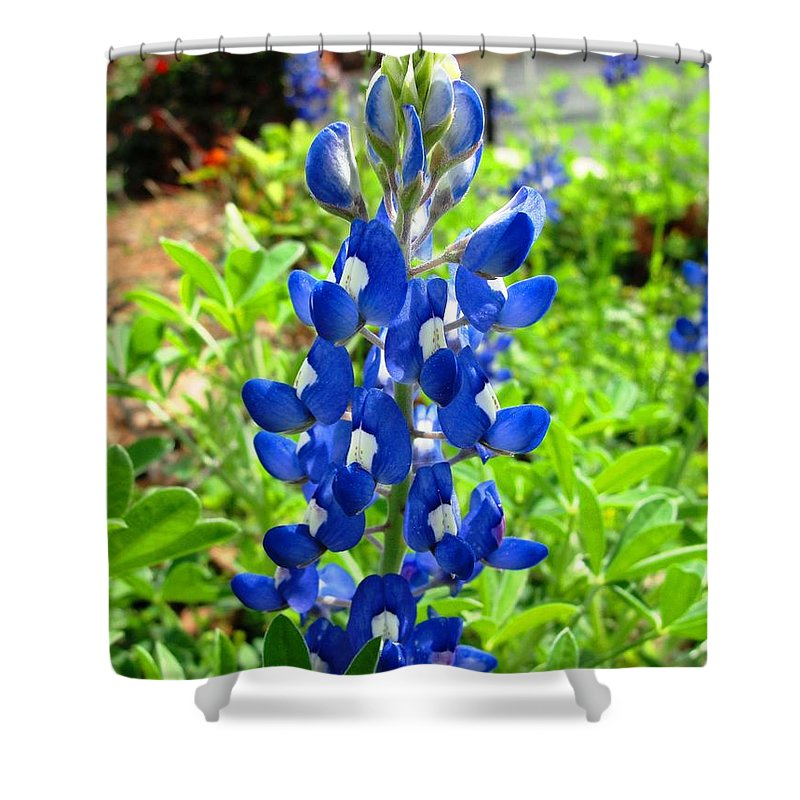 Flower Shower Curtain featuring the photograph Texas Bluebonnet by Norma Brock