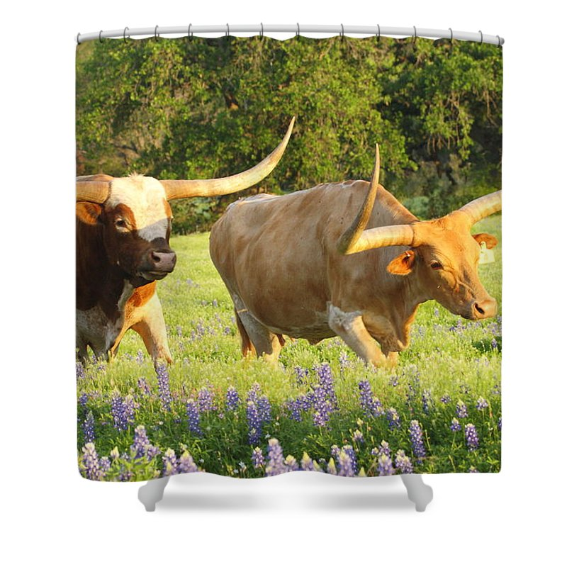 Longhorn Shower Curtain Featuring The Photograph Texas Cattle By Andrew McInnes