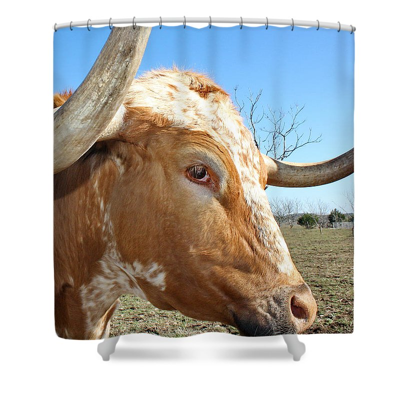 Longhorn Shower Curtain Featuring The Photograph Texas Cattle Closeup By Terry Fleckney
