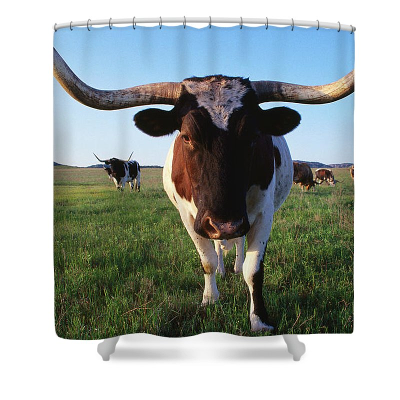 Horned Shower Curtain featuring the photograph Texas Longhorn Cattle by John Elk