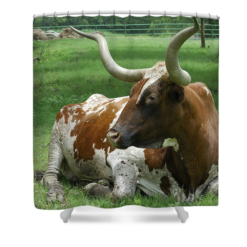 Texas Longhorn Shower Curtain Featuring The Photograph By Charles Beeler