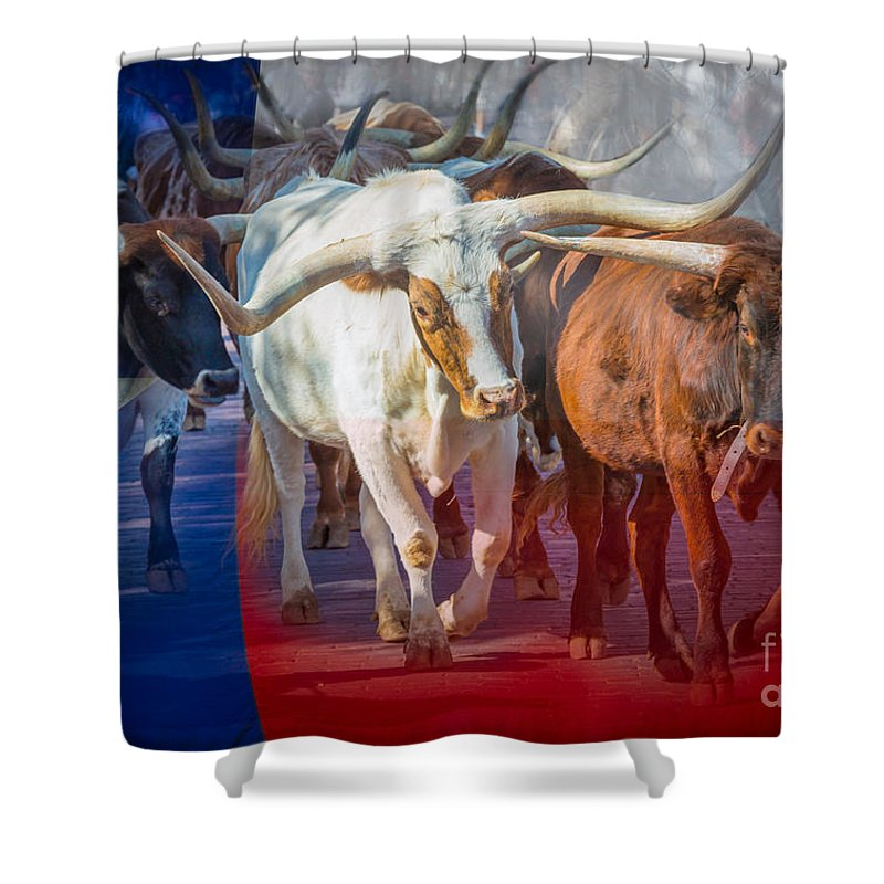 America Shower Curtain Featuring The Photograph Texas Longhorns By Inge Johnsson