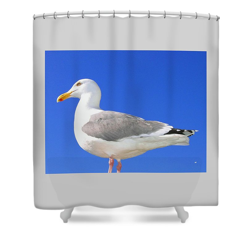 The Admiral Shower Curtain featuring the photograph The Admiral by Will Borden