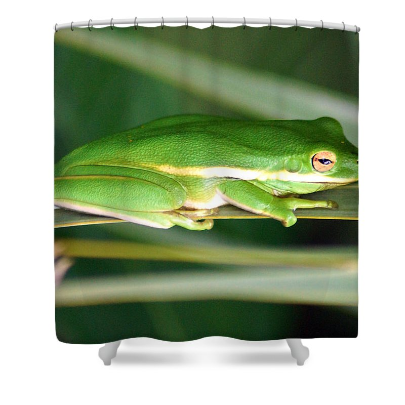 The American Green Tree Frog Shower Curtain featuring the photograph The American Green Tree Frog by Kim Pate