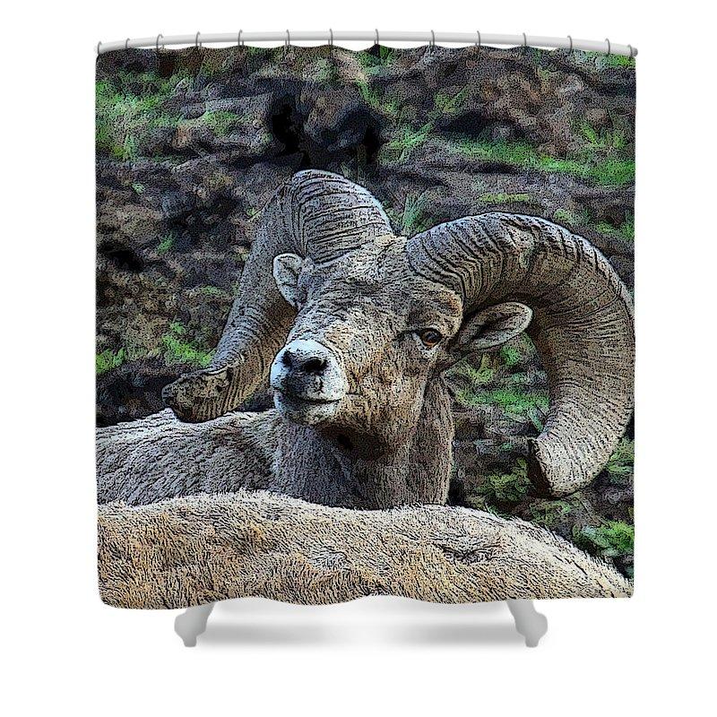 Bighorn Sheep Shower Curtain featuring the photograph The Bighorn by Steve McKinzie