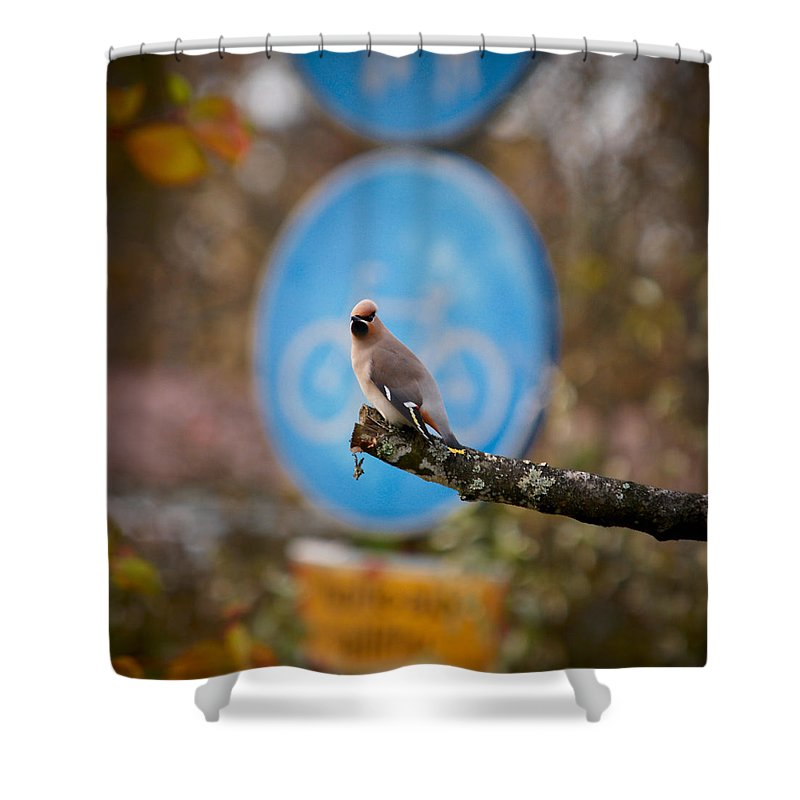 Autumn Shower Curtain featuring the photograph The Bird Without A Bike by Jouko Lehto