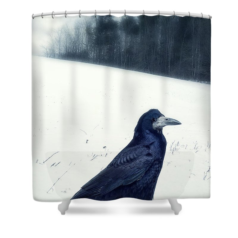 Raven Shower Curtain featuring the photograph The Black Crow Knows by Edward Fielding