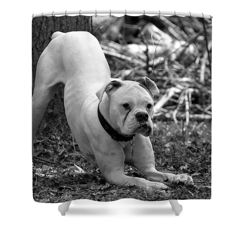 Animal Shower Curtain featuring the photograph The Boxer by Davandra Cribbie