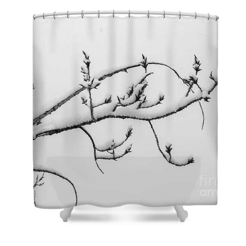 Nature Shower Curtain featuring the photograph The Branch Of Art by Phyllis Bradd