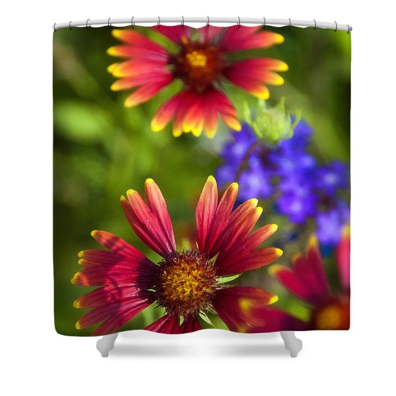 Gaillardia Shower Curtain featuring the photograph The Colors Of Summer by Saija Lehtonen