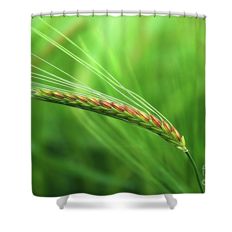 Corn Shower Curtain featuring the photograph The Corn by Hannes Cmarits