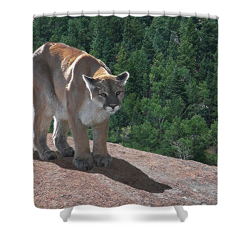 Cats Shower Curtain featuring the digital art The Cougar 1 by Ernie Echols
