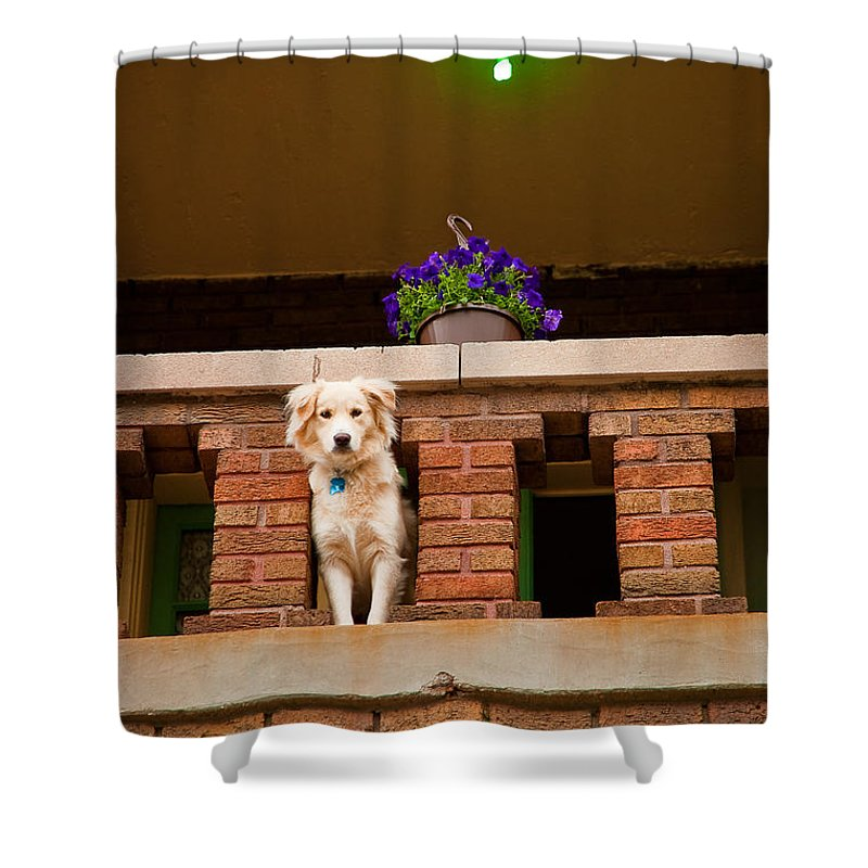 Dog Shower Curtain featuring the photograph The Critic by Kristi Swift