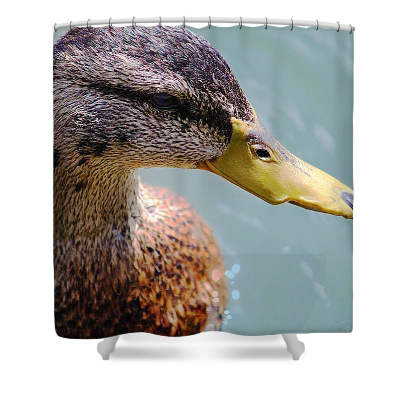 Animal Shower Curtain featuring the photograph The Duck by Milena Ilieva