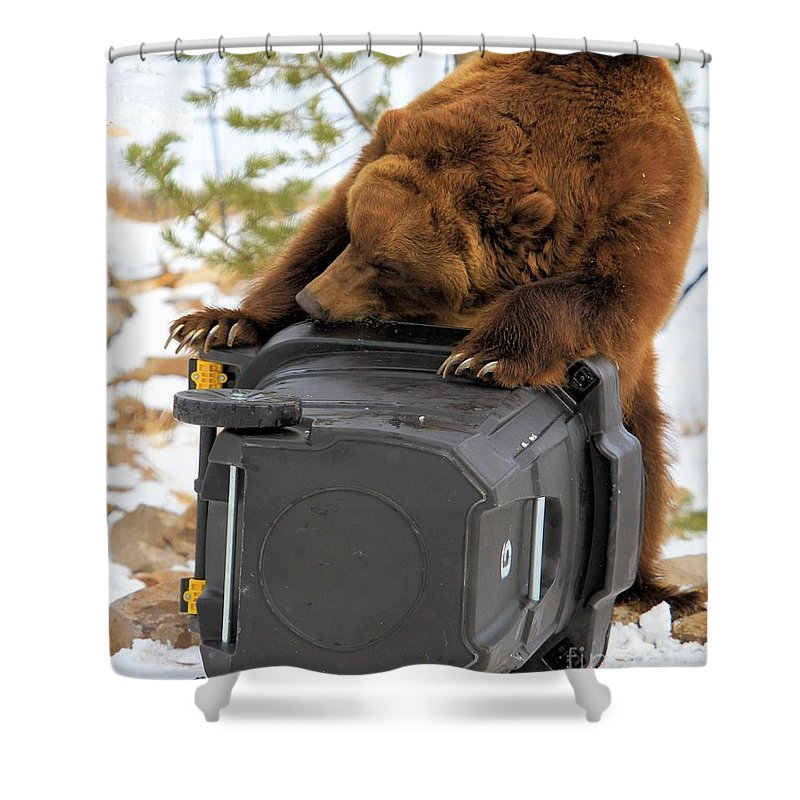 Grizzly Bear Shower Curtain featuring the photograph The Easter Egg by Adam Jewell