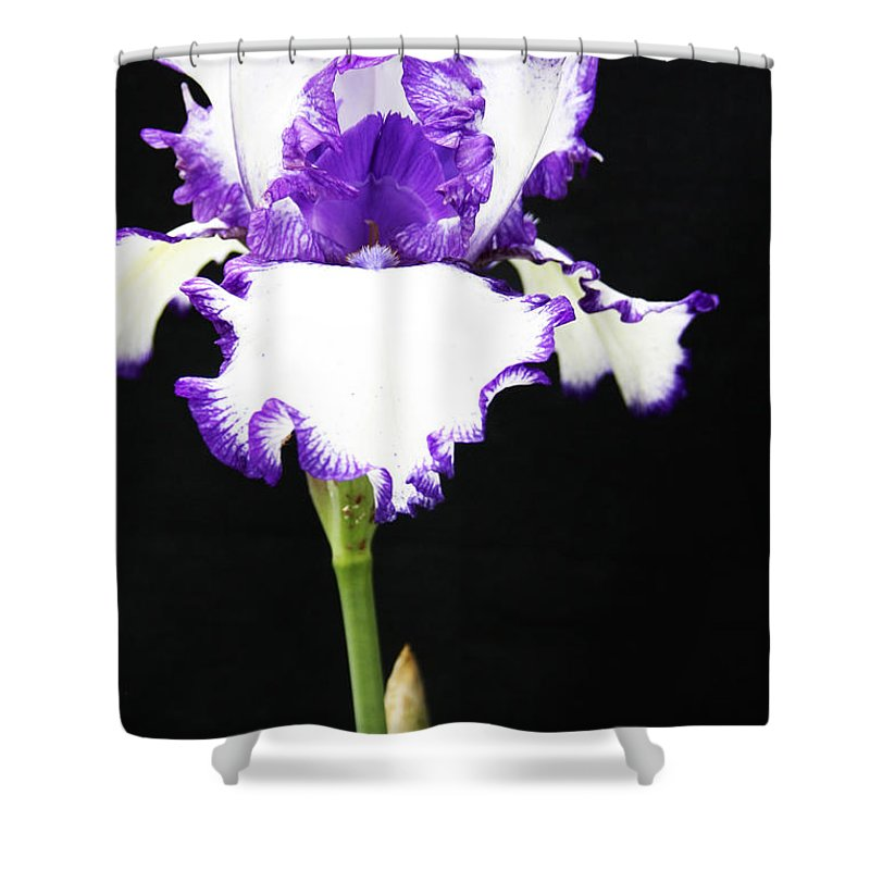 Iris Shower Curtain featuring the photograph The Edge Of Purple by Christina Gupfinger