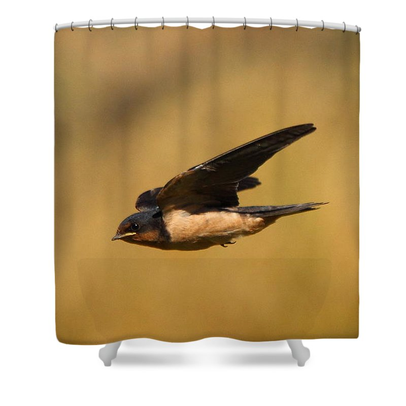 Animal Shower Curtain featuring the photograph First Swallow Of Spring by Robert Frederick